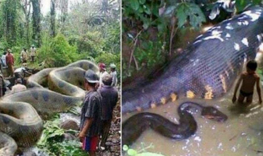 Աշխարհի 10 ամենավտանգավոր օձերը. զգուշացեք դրանցից