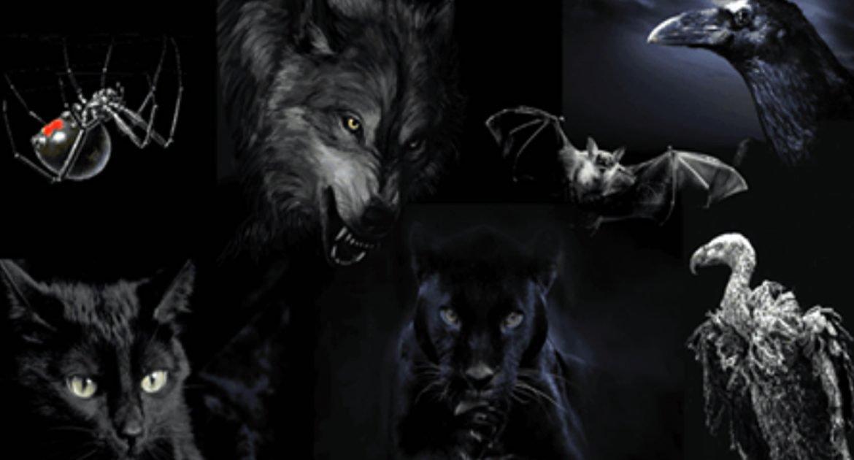 Թեստ․ Ընտրե՛ք կենդանիներից մեկին և բացահայտե՛ք ձեր անձի խավար կողմը