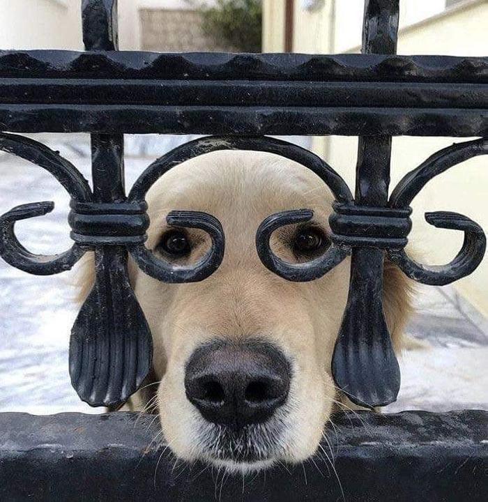 25 զվարճալի շներ, որոնք անպայման կզվարճացնեն ձեզ