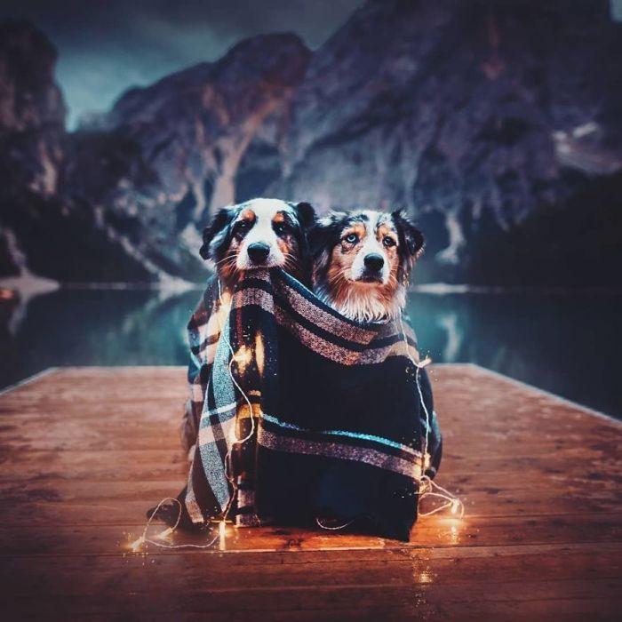 Զարմանալի շների գեղեցիկ կադրեր` տաղանդավոր լուսանկարիչից