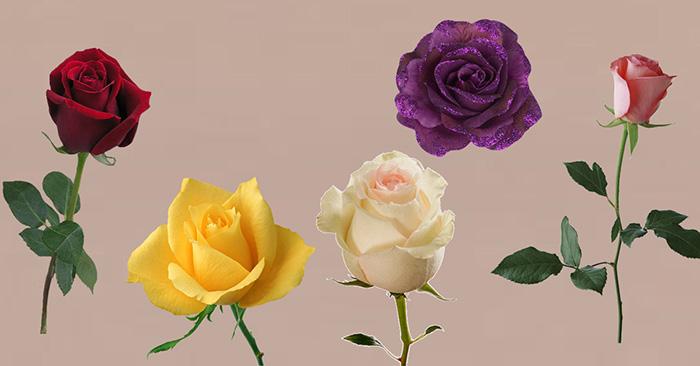 Ընտրեք վարդ և պարզեք, թե երբ ձեր նվիրական գաղտնի ցանկությունը կկատարվի