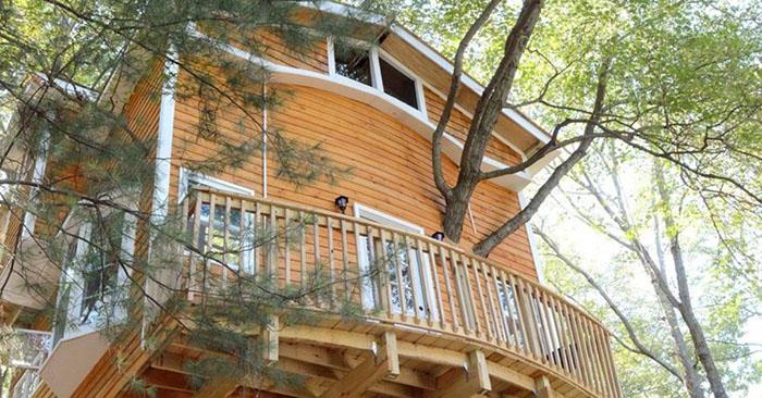 Պապը որոշեց թոռների համար ծառի վրա տուն կառուցել, բայց տարվեց և շատ հեռուն գնաց