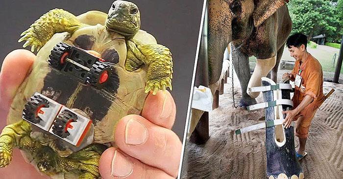 14 կենդանիներ, որոնք նոր կյանք են վերագտել պրոտեզների շնորհիվ